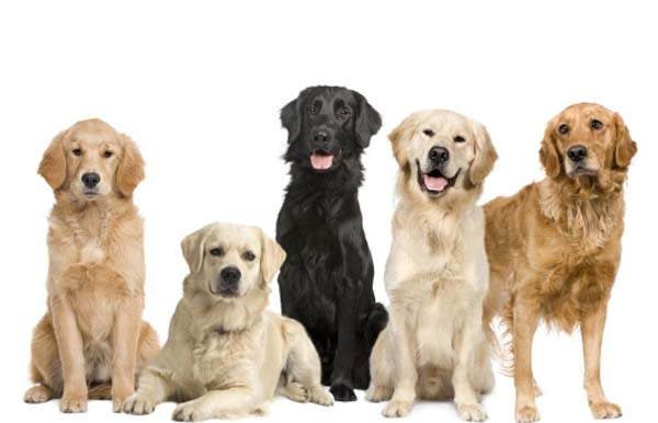 años-perros