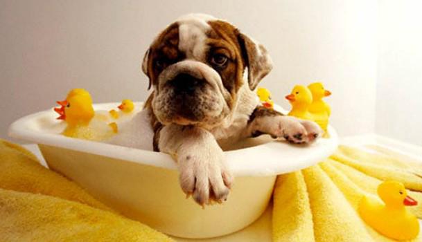 bañar-perro