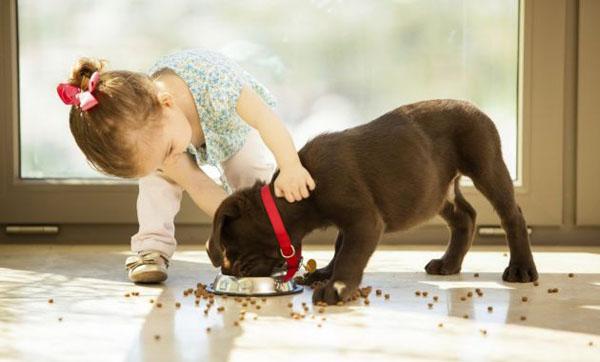 cuidados-de-mascotas-que-los-ninos-pueden-realizar