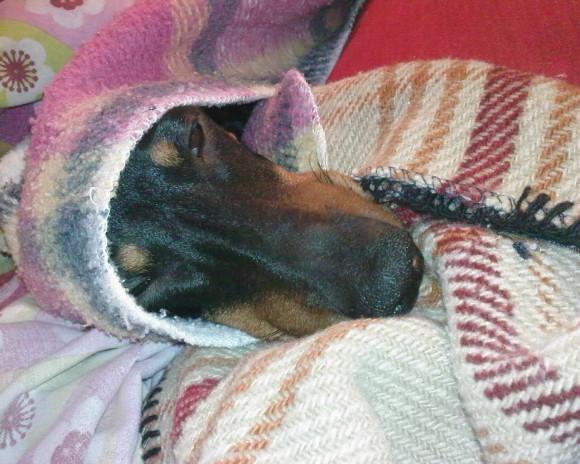 proteger perro  en invierno