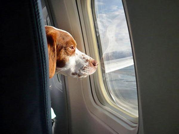 viajar-en-avión-con-perro