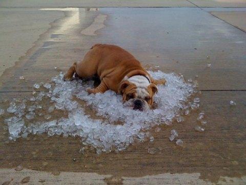 enfermedades de verano en los perros