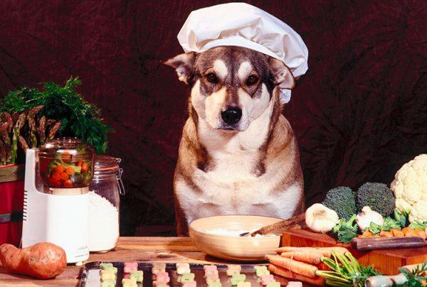 comida-casera-para-perros