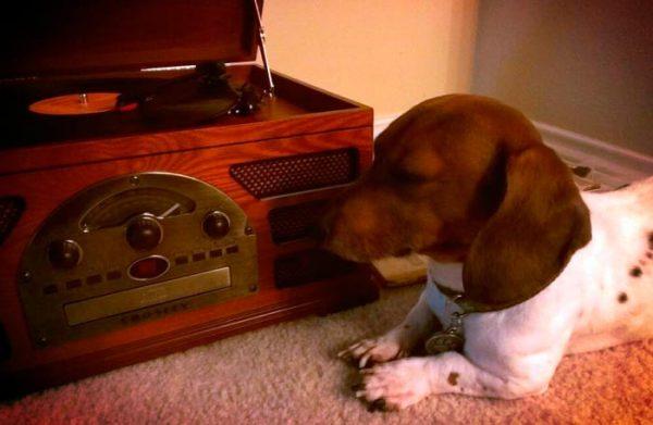 perros gusta música