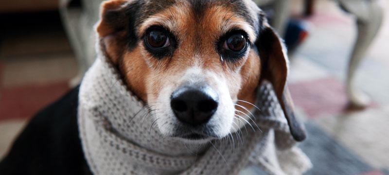 perro-invierno