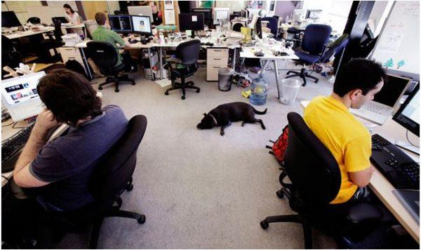 perros-en-la-oficina
